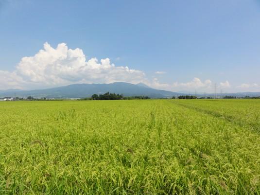 磐梯山を見る(三川付近)